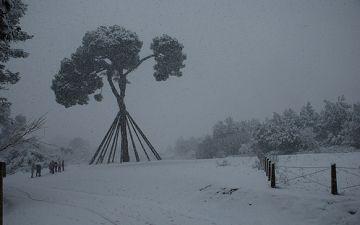 La nevada també ha colpejat el Pi d'en Xandri