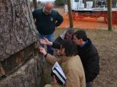L'arbre es recupera favorablement de l'atac que va patir fa 8 anys
