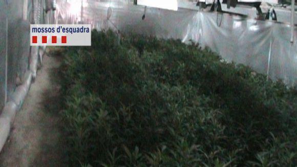 Cau una xarxa que havia llogat una casa a Sant Cugat per cultivar marihuana