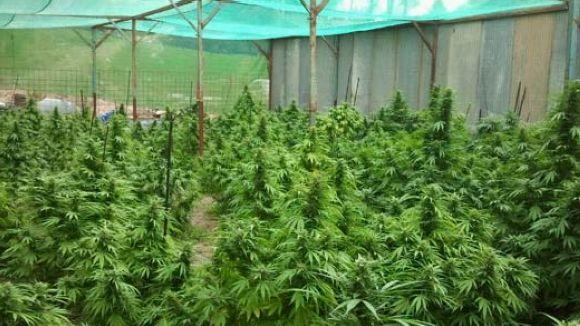 Detingut un santcugatenc per presumpte cultiu de marihuana a Rubí