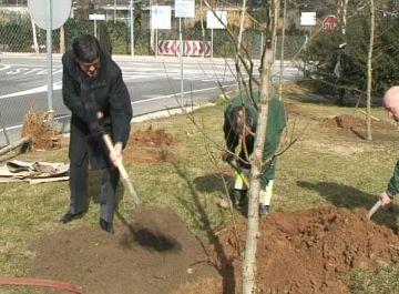 Sant Cugat manté la mitjana d'arbres per habitant tot i l'increment de població