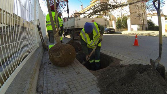 Sant Cugat tindrà un arbre urbà per cada 1,09 habitants a principis de 2015