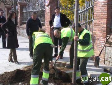 Sant Cugat tindrà aquesta primavera prop de 53.000 arbres urbans