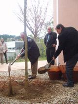 Dissabte s'ha fet la plantada simbòlica de l'últim arbre