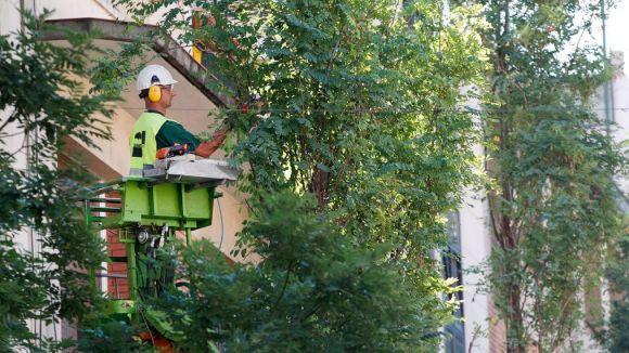 Sant Cugat comença la poda d'arbres amb criteris de sostenibilitat