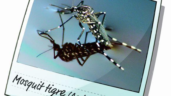 Comença la campanya per combatre el mosquit tigre
