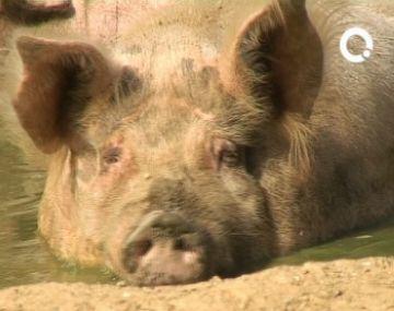 Trasllat o tancament del zoo de Cal Castillo en vuit anys