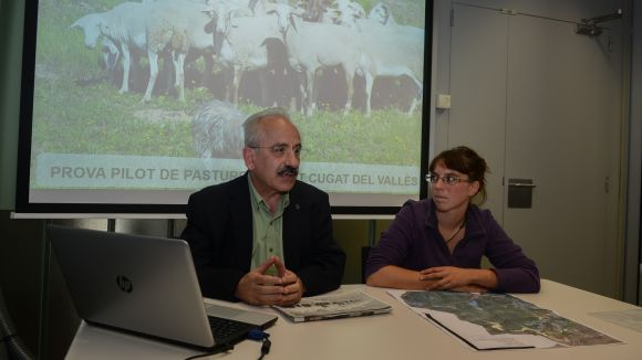 Un ramat de 120 cabres i ovelles pasturarà per Collserola per netejar els boscos i prevenir incendis