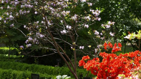 Les gramínies i la parietària, el pol·len més present a la primavera i l'estiu a Sant Cugat