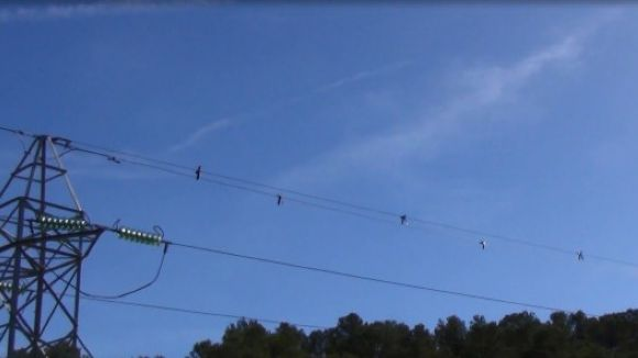 Endesa instal·la mesures de protecció al cablejat per a les aus de Collserola