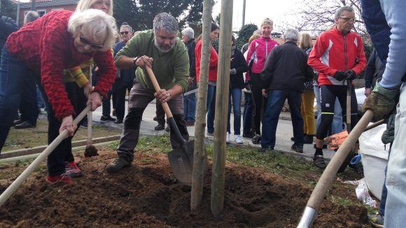 El Dia de l'Arbre a Valldoreix reivindica la identitat natural del territori plantant freixes