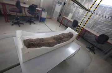 Es fan públiques les primeres dades de l'estudi de la tomba de Pere el Gran