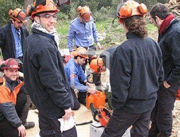 Nou persones contractades per la Generalitat retiraran els arbres caiguts de Collserola