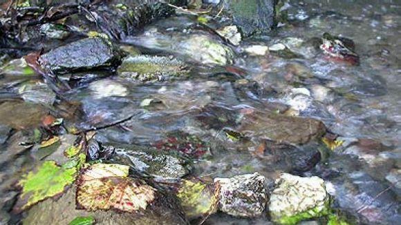 El tram de Can Borrull de la riera de Vallvidrera està contaminat, segons l'associació El Mussol