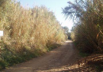 El parc de Collserola contempla regular l'ús de les bicicletes al camí de Sant Medir
