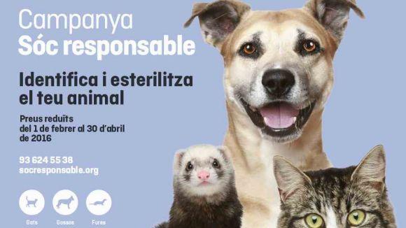 La campanya Sóc responsable permet esterilitzar animals domèstics a preu reduït