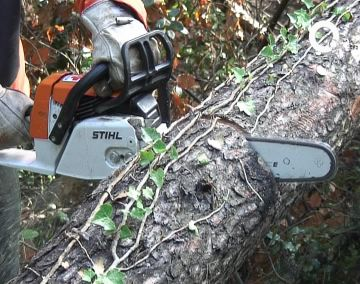 Els treballadors de la Generalitat han netejat dos quilòmetres de camí a Collserola i han tallat 200 arbres