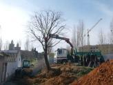 L'arbre s'ha trasplantat a un solar ubicat just al costat