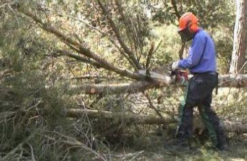 Dues empreses especialitzades treballen en la neteja de massa forestal de Collserola
