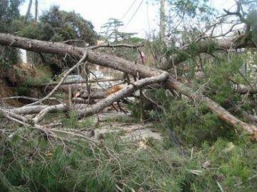 L'Ajuntament ofereix assessorament jurídic als afectats pel temporal de vent