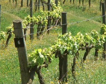 Sant Cugat s'afegeix al cicle d'activitats 'La vinya i el vi a Collserola'