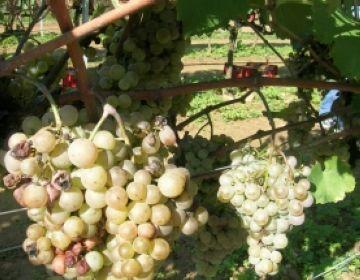 Antics vinyataires s'ofereixen per explicar el seu ofici als joves de la ciutat