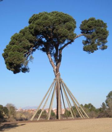 Sant Cugat s'adhereix a la Declaració de Vic de la Xarxa de Ciutats i Pobles cap a la Sostenibilitat